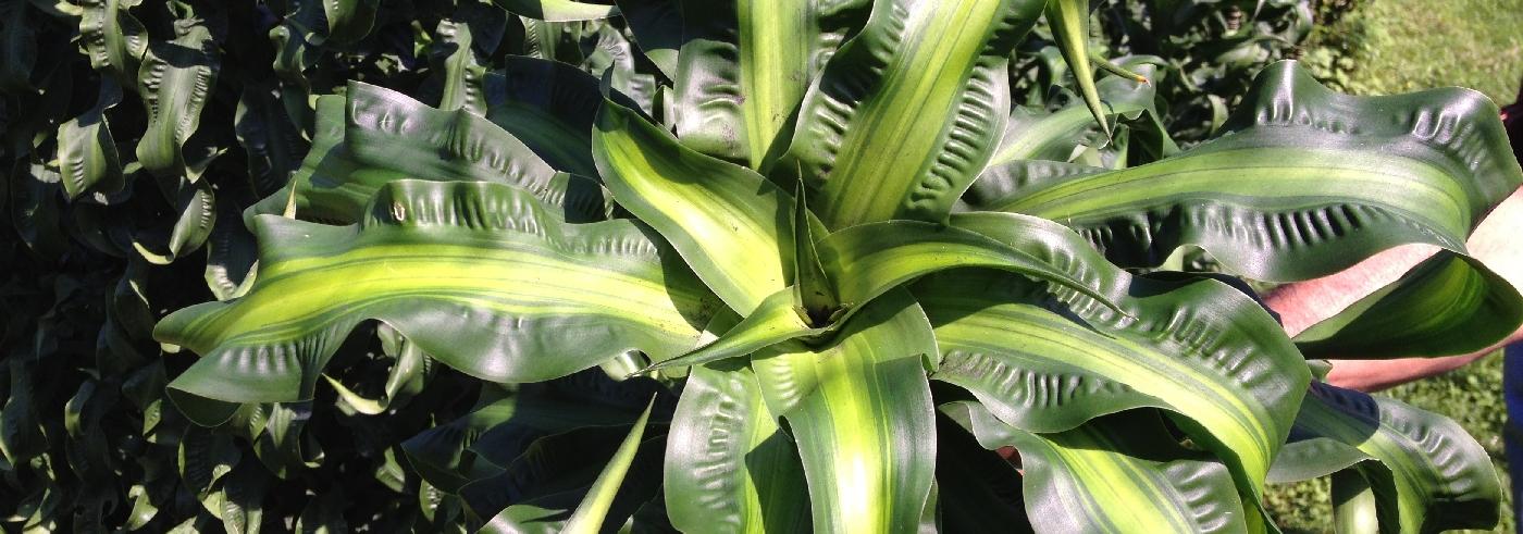 speciale-planten